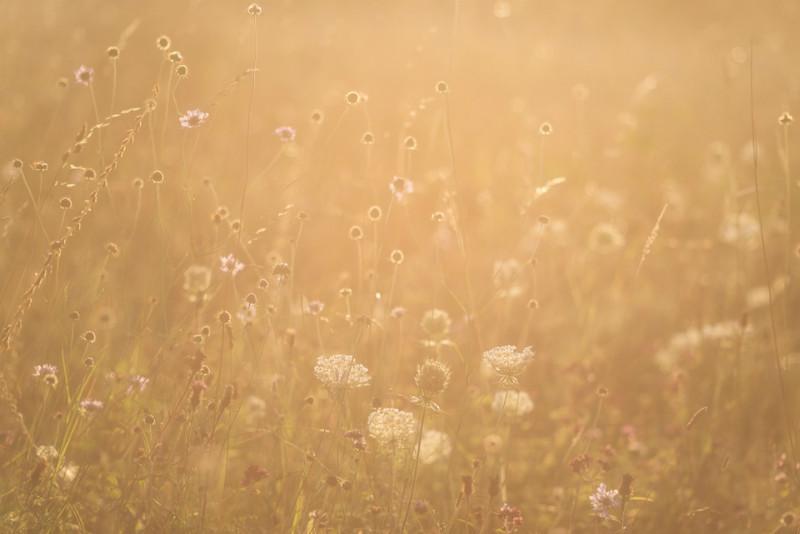 Native British wild flowers