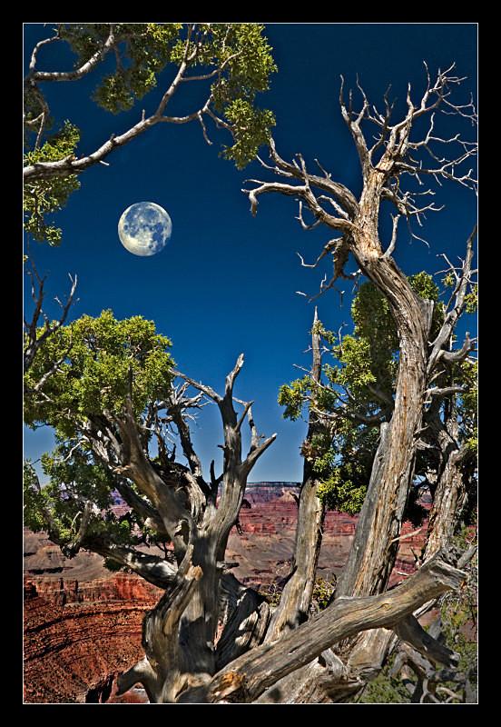 Grand Canyon Moonrise - Landscapes