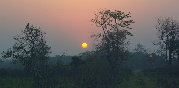 Jungle Dawn - India (Assam, Brahmaputra cruise, Agra and Jaipur)