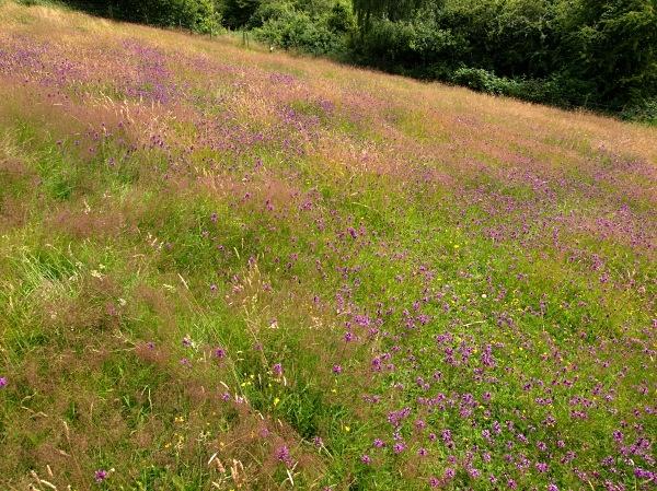 Sally Clark's Meadow - Shire Brook Valley
