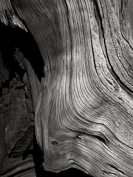 Weathered Oak - Landscape Details