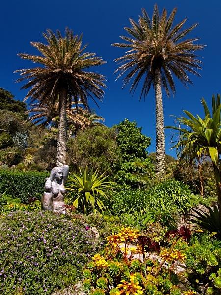 The Abbey Garden, Tresco #2 - Isles of Scilly