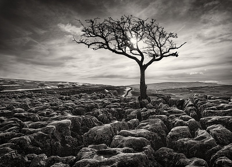 Black and white tree photograph