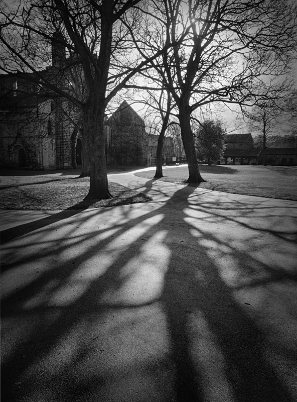 Tree Shadow - Landscapes