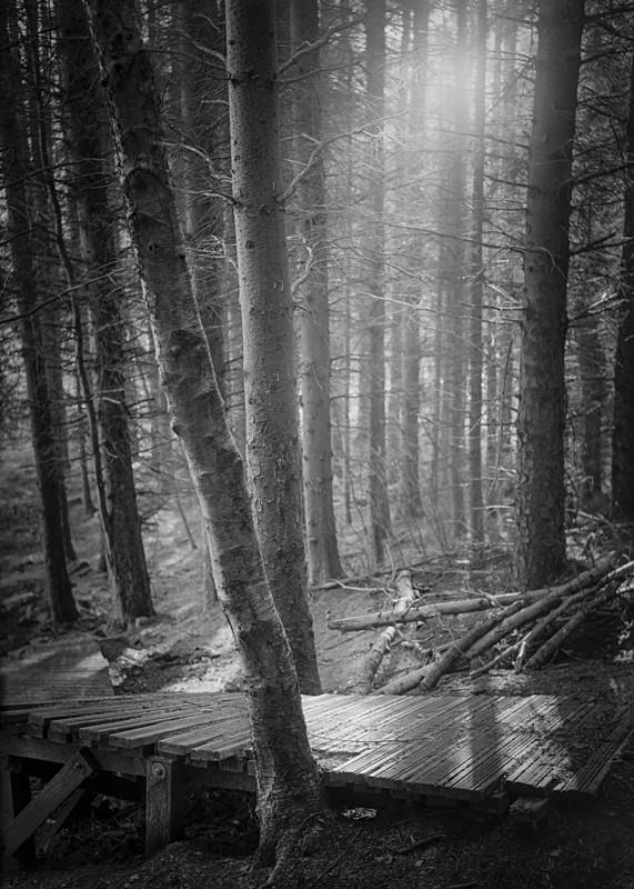 Woodland Light Stainburn Forrest - Landscapes