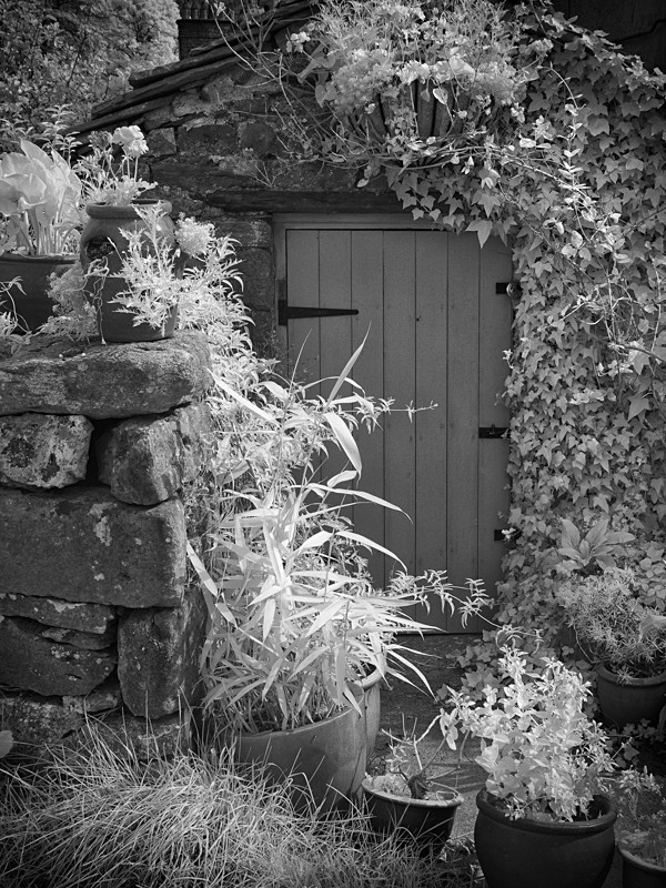 Shed Door - Abstract & Still Life