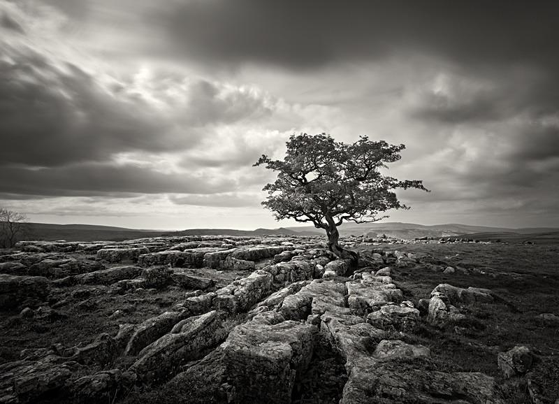 Tree and Limestone Grit