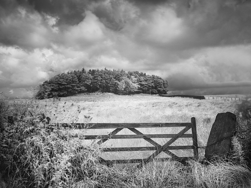 Chained Gate and Coppice, infrared - Infrared