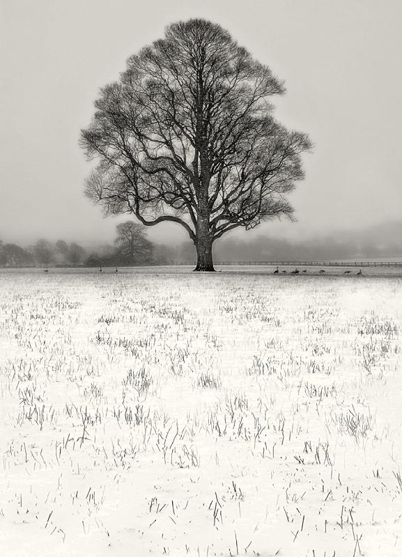 Winter Scene Black and White Photography Ilkley