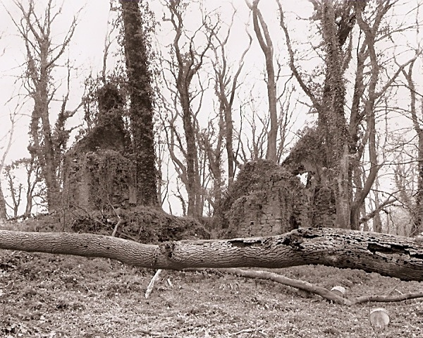 SYSTERNE / SISTER'S HOUSE, Minwear Forest, Canaston, Pembrokeshire 2009
