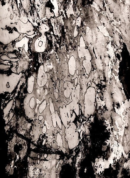 TREE ABSTRACTION, Rhayader, Powys 1996 - THE WELSH LANDSCAPE