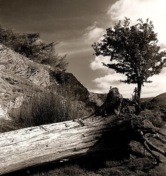 DEAD TREE, Cefn Coch, Cwmystwyth, Ceredigion 1992 - THE WELSH LANDSCAPE