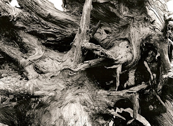 DEAD TREE ROOTS, Cefn Coch, Cwmystwyth, Ceredigion 1996 - THE WELSH LANDSCAPE