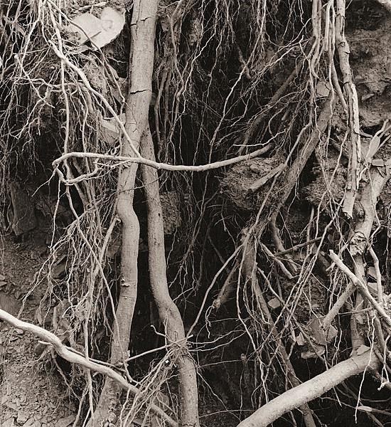 HAFOD, Ceredigion 1991 - THE WELSH LANDSCAPE