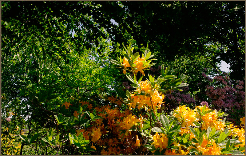 Kotka Fuksinpuisto 4 - Parks and Gardens