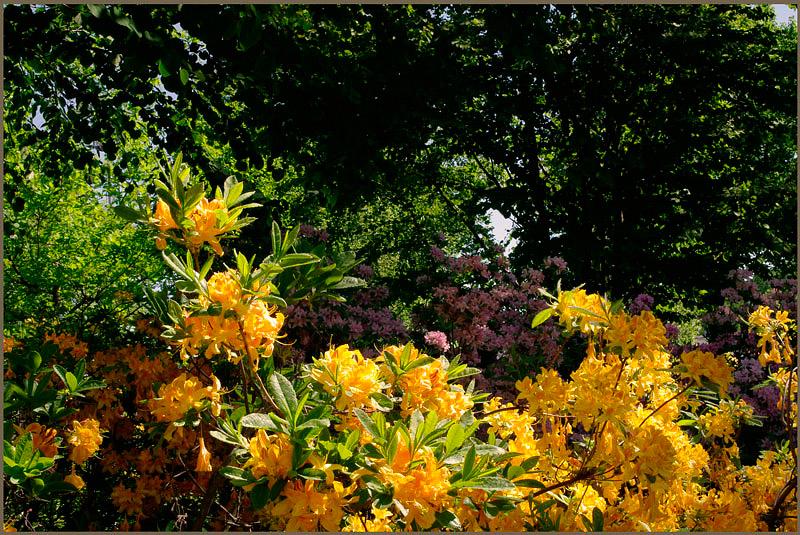 Kotka Fuksinpuisto 5 - Parks and Gardens