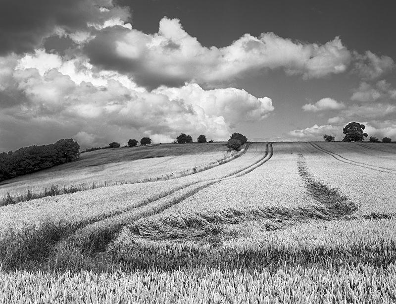 2168 - Wistley Hill Wheatfield - The Cotswold Way